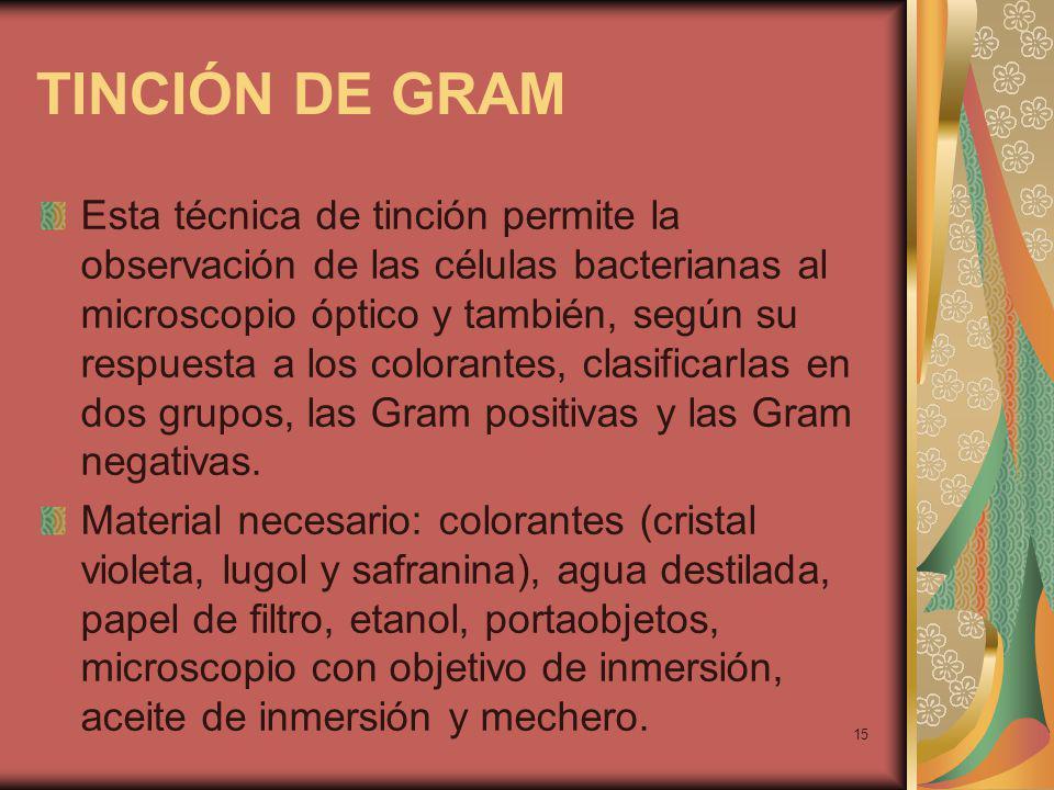 15 TINCIÓN DE GRAM Esta técnica de tinción permite la observación de las células bacterianas al microscopio óptico y también, según su respuesta a los colorantes, clasificarlas en dos grupos, las Gram positivas y las Gram negativas.
