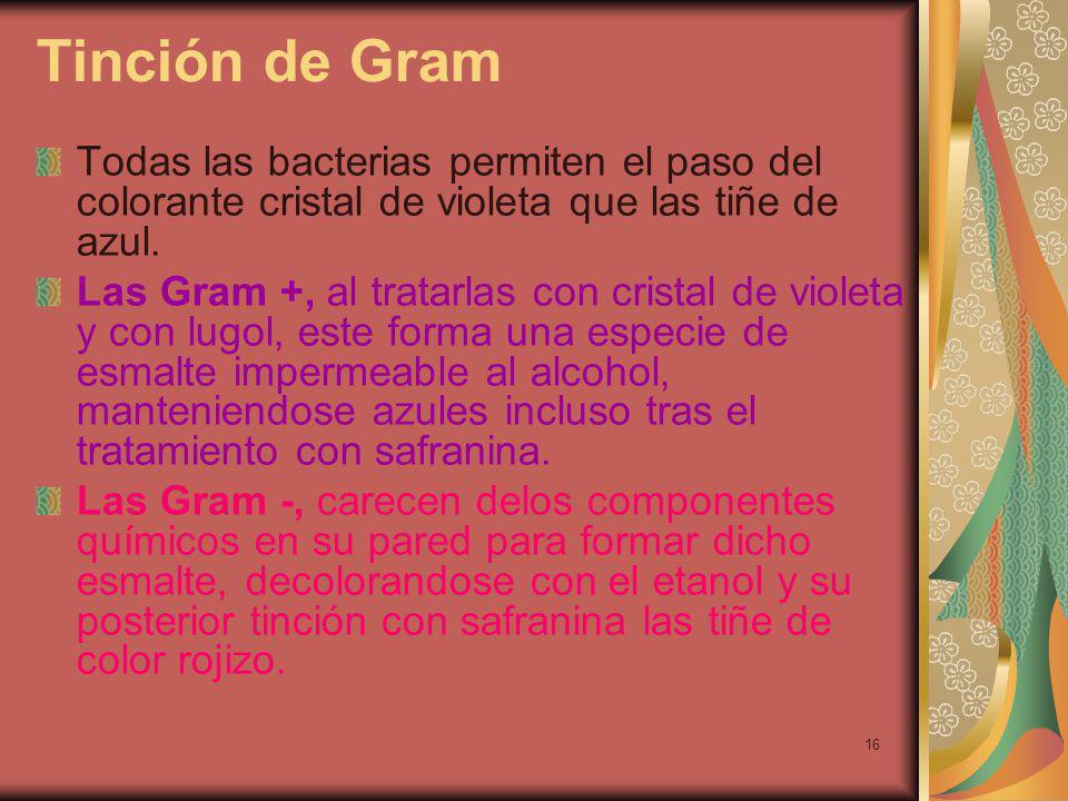 16 Tinción de Gram Todas las bacterias permiten el paso del colorante cristal de violeta que las tiñe de azul.