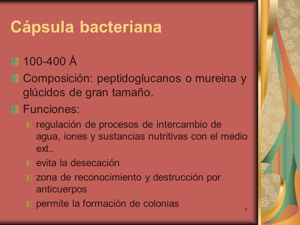4 Cápsula bacteriana 100-400 Å Composición: peptidoglucanos o mureina y glúcidos de gran tamaño.