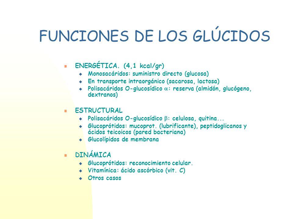 FUNCIONES DE LOS GLÚCIDOS ENERGÉTICA. (4,1 kcal/gr) Monosacáridos: suministro directo (glucosa) En transporte intraorgánico (sacarosa, lactosa) Polisa