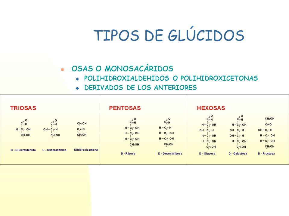 TIPOS DE GLÚCIDOS OSAS O MONOSACÁRIDOS POLIHIDROXIALDEHIDOS O POLIHIDROXICETONAS DERIVADOS DE LOS ANTERIORES ÓSIDOS HOLÓSIDOS: FORMADOS POR UNIÓN MONO