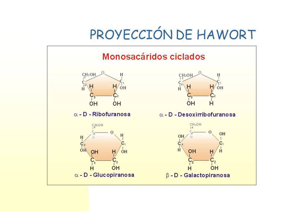 PROYECCIÓN DE HAWORT