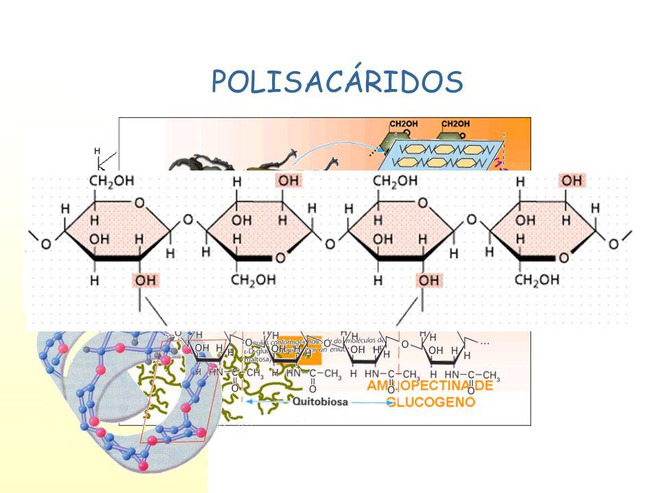 Heterósidos Formados por monosacáridos y componente aglicón.