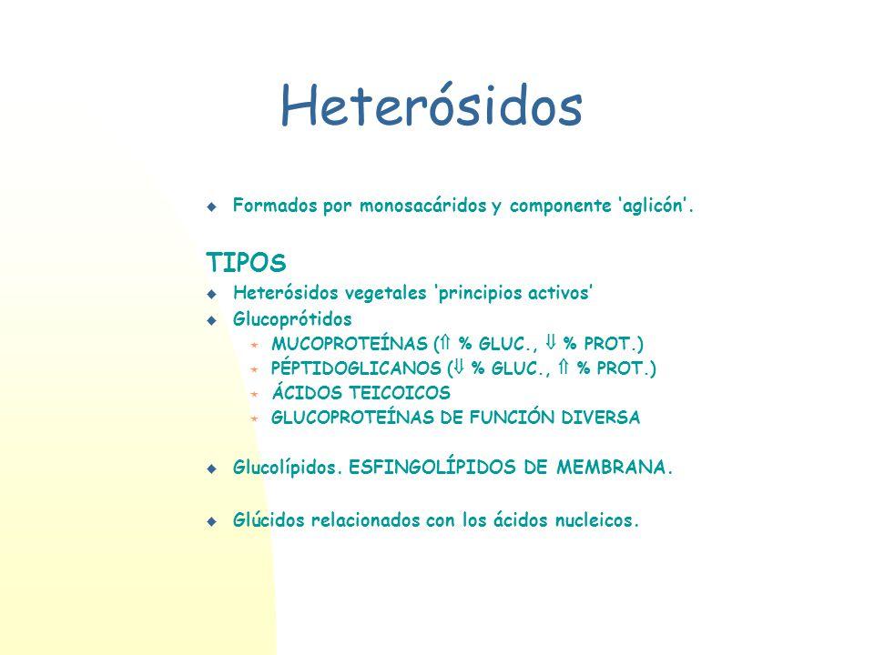 Heterósidos Formados por monosacáridos y componente aglicón. TIPOS Heterósidos vegetales principios activos Glucoprótidos MUCOPROTEÍNAS ( % GLUC., % P
