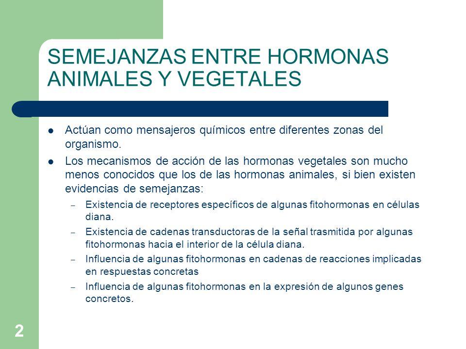 2 SEMEJANZAS ENTRE HORMONAS ANIMALES Y VEGETALES Actúan como mensajeros químicos entre diferentes zonas del organismo. Los mecanismos de acción de las