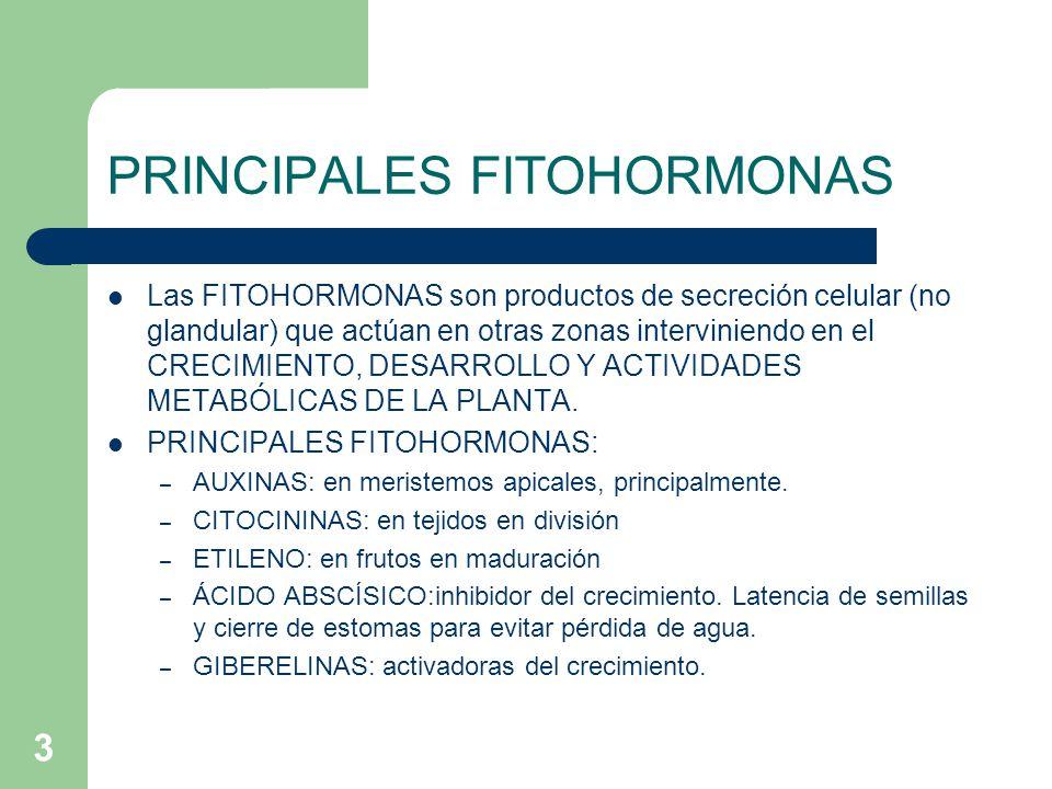 3 PRINCIPALES FITOHORMONAS Las FITOHORMONAS son productos de secreción celular (no glandular) que actúan en otras zonas interviniendo en el CRECIMIENT