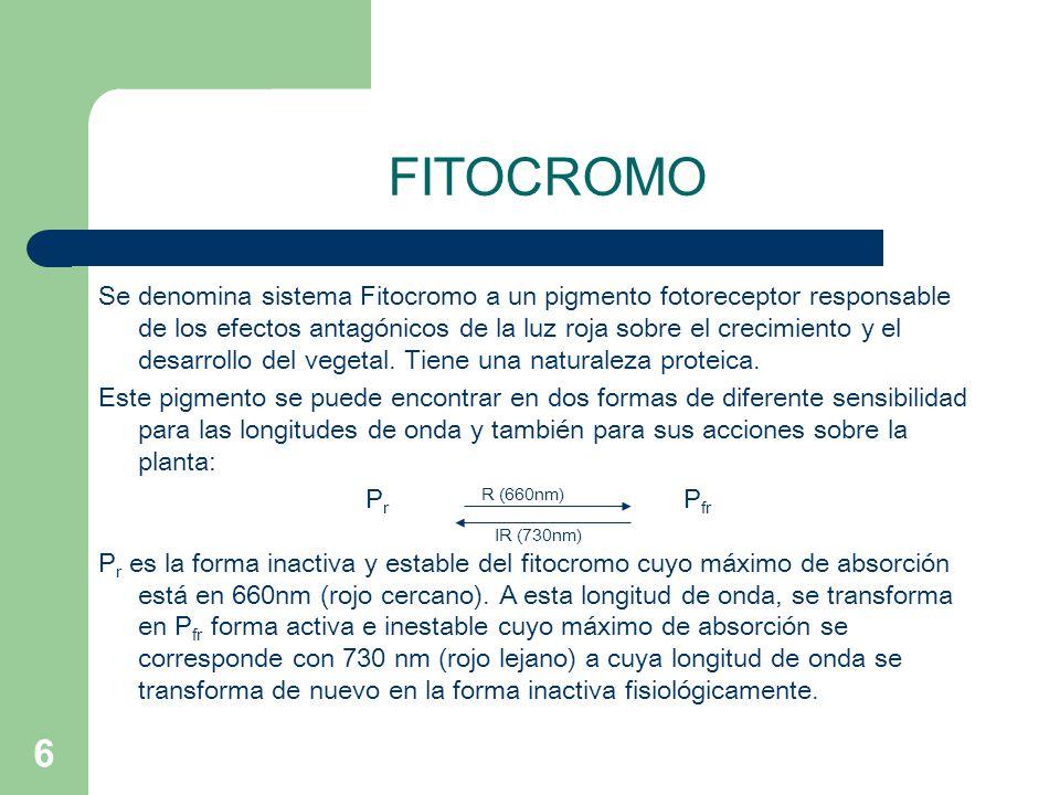 6 FITOCROMO Se denomina sistema Fitocromo a un pigmento fotoreceptor responsable de los efectos antagónicos de la luz roja sobre el crecimiento y el d