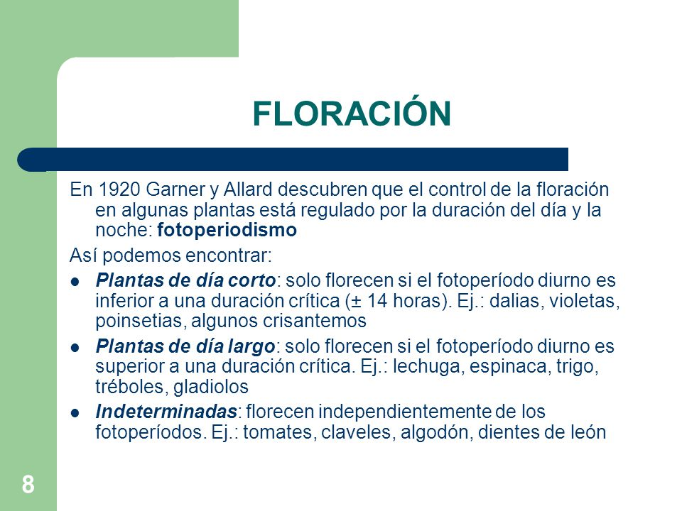8 FLORACIÓN En 1920 Garner y Allard descubren que el control de la floración en algunas plantas está regulado por la duración del día y la noche: foto