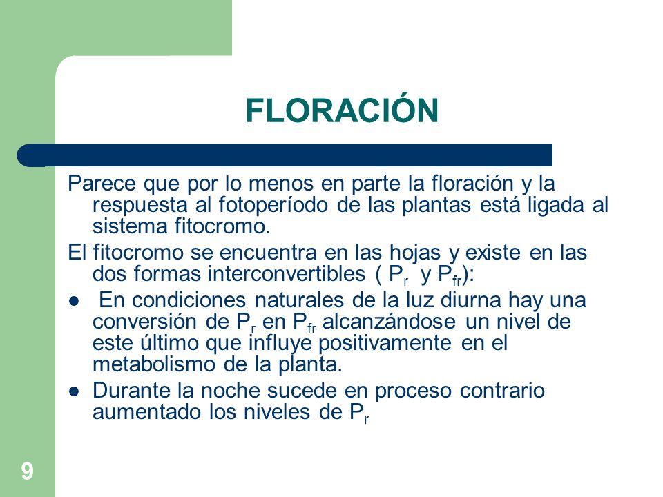 9 FLORACIÓN Parece que por lo menos en parte la floración y la respuesta al fotoperíodo de las plantas está ligada al sistema fitocromo. El fitocromo