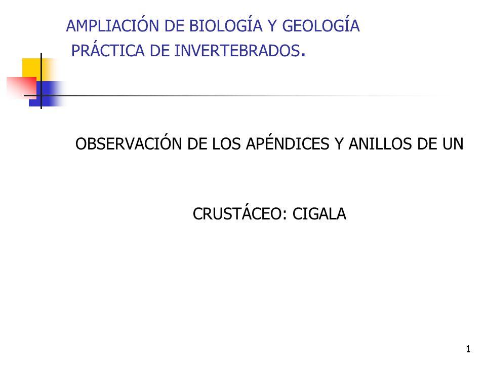 1 AMPLIACIÓN DE BIOLOGÍA Y GEOLOGÍA PRÁCTICA DE INVERTEBRADOS. OBSERVACIÓN DE LOS APÉNDICES Y ANILLOS DE UN CRUSTÁCEO: CIGALA