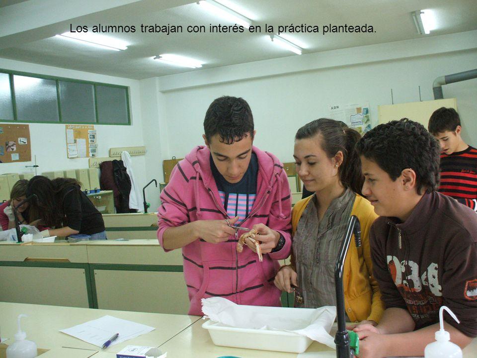 10 Los alumnos trabajan con interés en la práctica planteada.