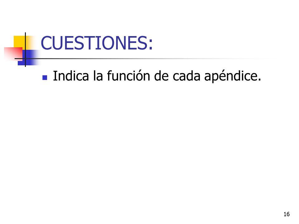 16 CUESTIONES: Indica la función de cada apéndice.