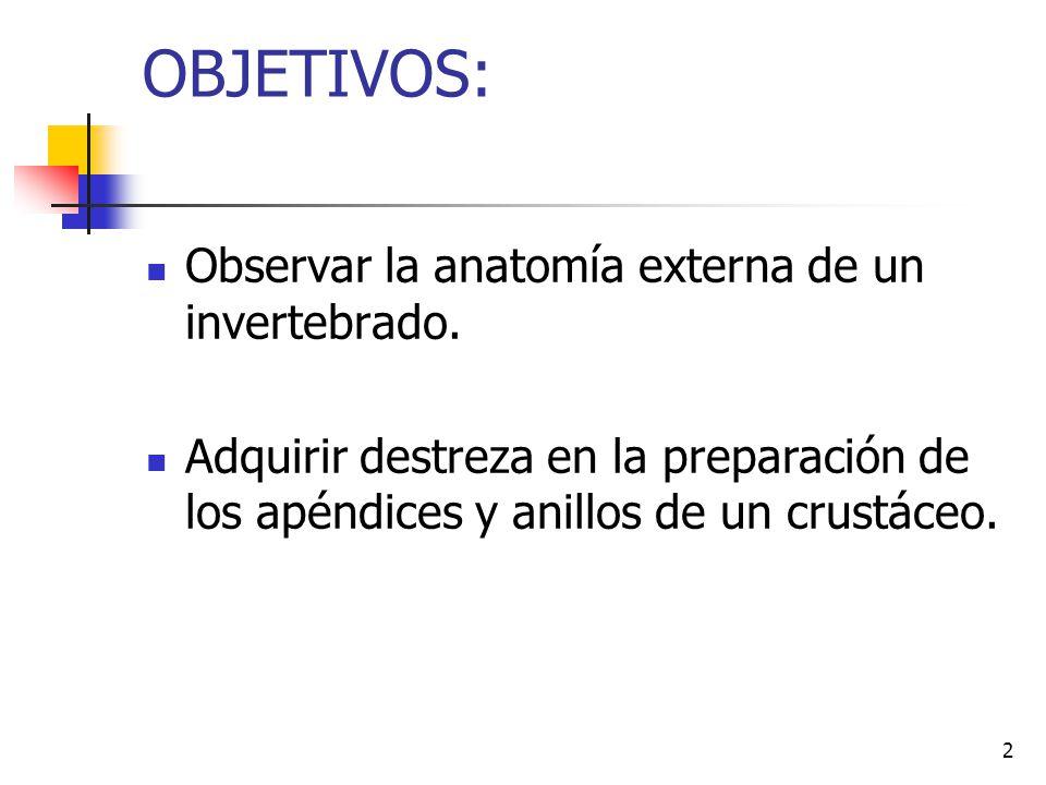 2 OBJETIVOS: Observar la anatomía externa de un invertebrado. Adquirir destreza en la preparación de los apéndices y anillos de un crustáceo.
