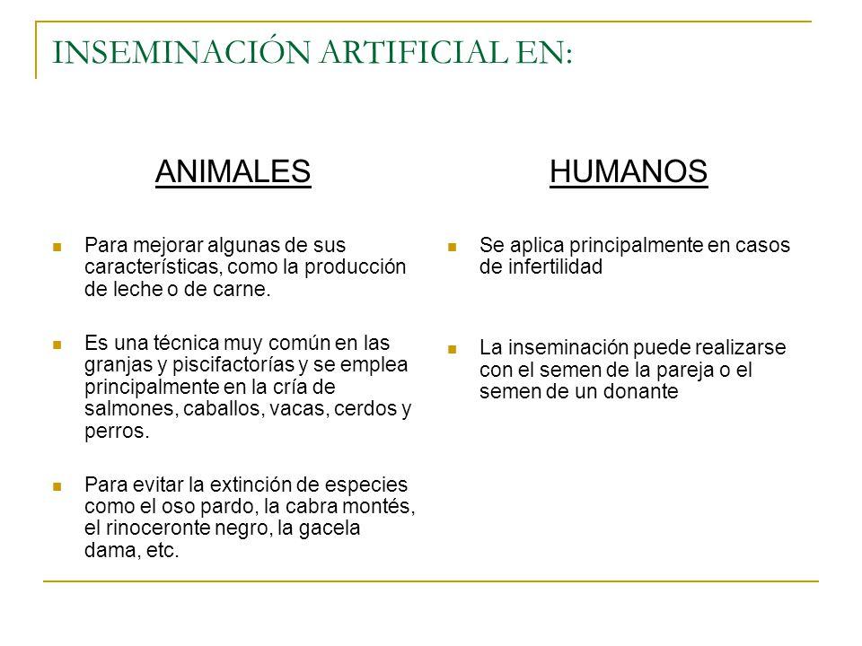 INSEMINACIÓN ARTIFICIAL EN: ANIMALES Para mejorar algunas de sus características, como la producción de leche o de carne. Es una técnica muy común en
