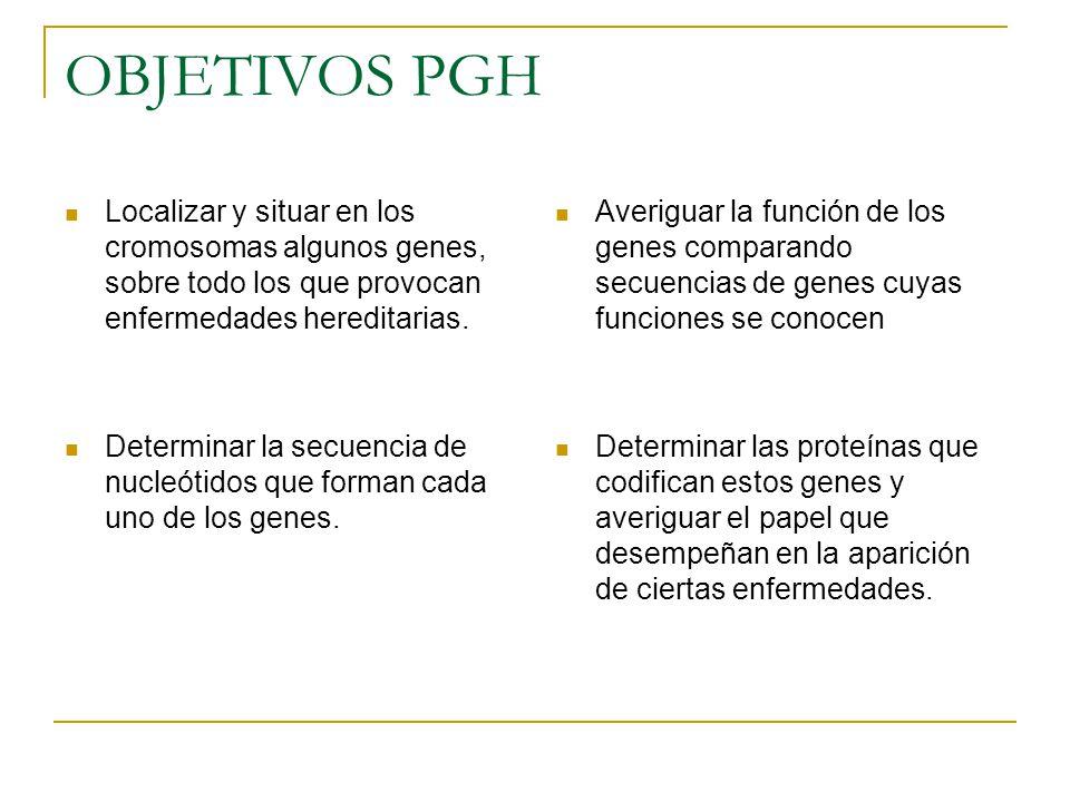 OBJETIVOS PGH Localizar y situar en los cromosomas algunos genes, sobre todo los que provocan enfermedades hereditarias. Determinar la secuencia de nu