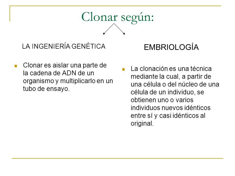 Clonar según: LA INGENIERÍA GENÉTICA Clonar es aislar una parte de la cadena de ADN de un organismo y multiplicarlo en un tubo de ensayo. EMBRIOLOGÍA