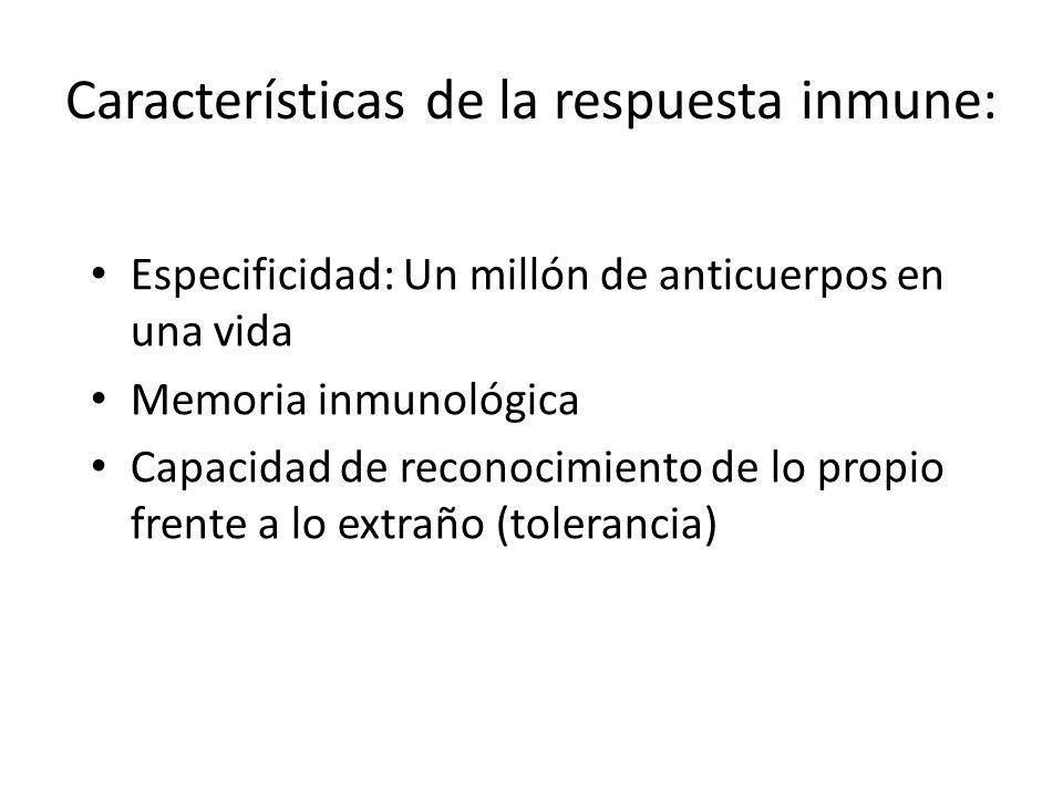 Características de la respuesta inmune: Especificidad: Un millón de anticuerpos en una vida Memoria inmunológica Capacidad de reconocimiento de lo propio frente a lo extraño (tolerancia)