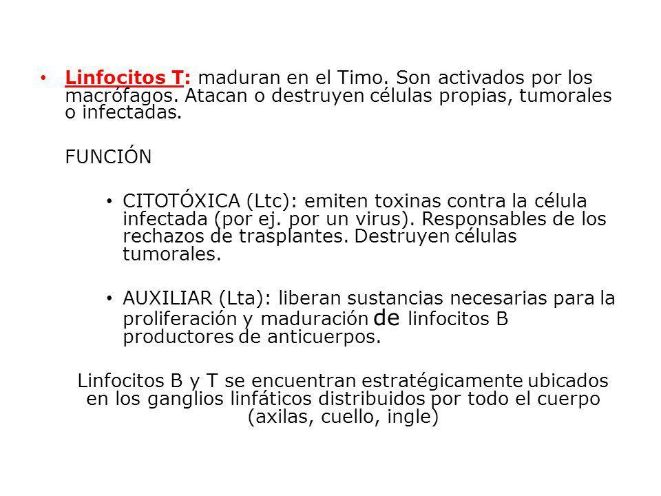 Linfocitos T: maduran en el Timo. Son activados por los macrófagos. Atacan o destruyen células propias, tumorales o infectadas. FUNCIÓN CITOTÓXICA (Lt
