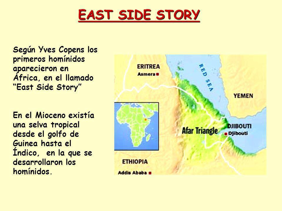 Destino del Homo heidelbergensis Las poblaciones europeas del Pleistoceno medio evolucionaron en Europa en condiciones de relativo aislamiento, sin intercambio genético con otras poblaciones, debido a las glaciaciones que afectaron al hemisferio norte.