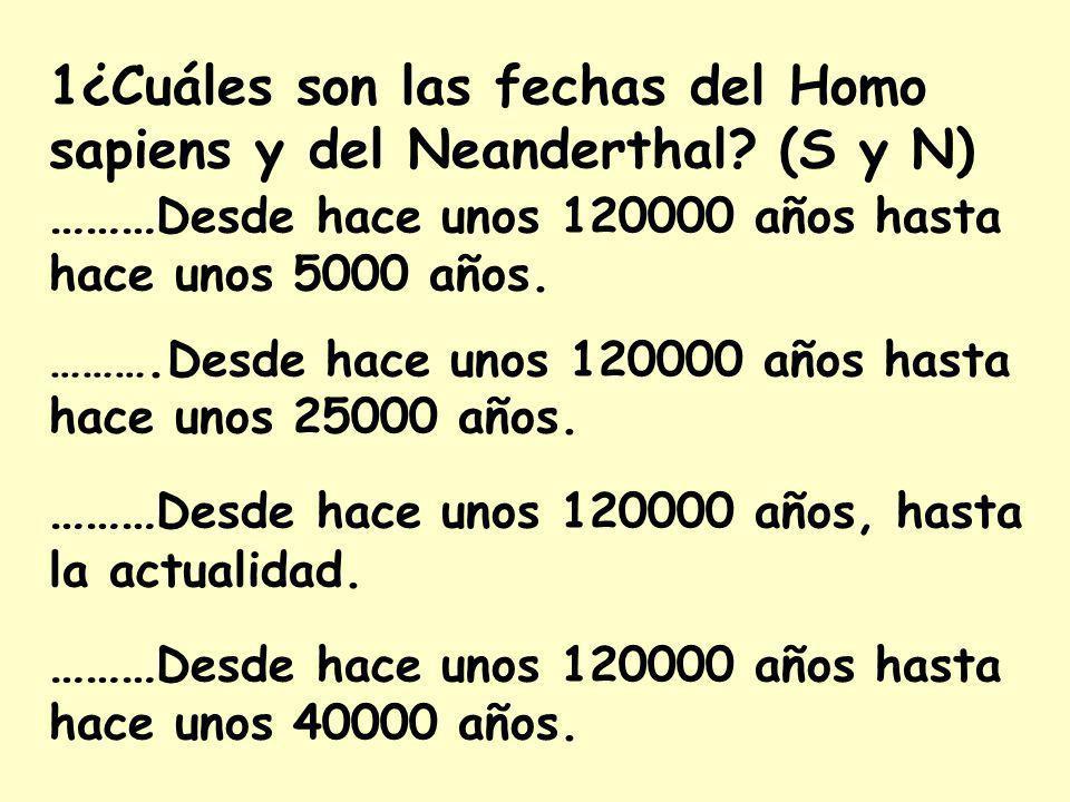 1¿Cuáles son las fechas del Homo sapiens y del Neanderthal.
