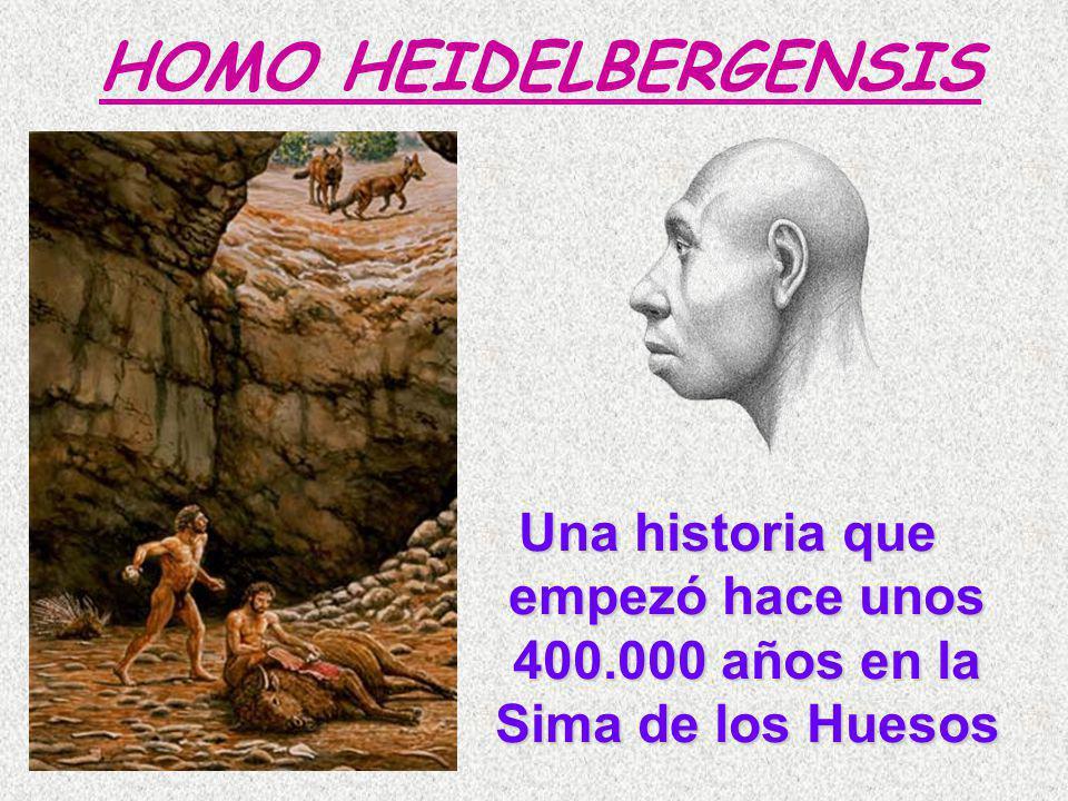 Una historia que empezó hace unos 400.000 años en la Sima de los Huesos HOMO HEIDELBERGENSIS