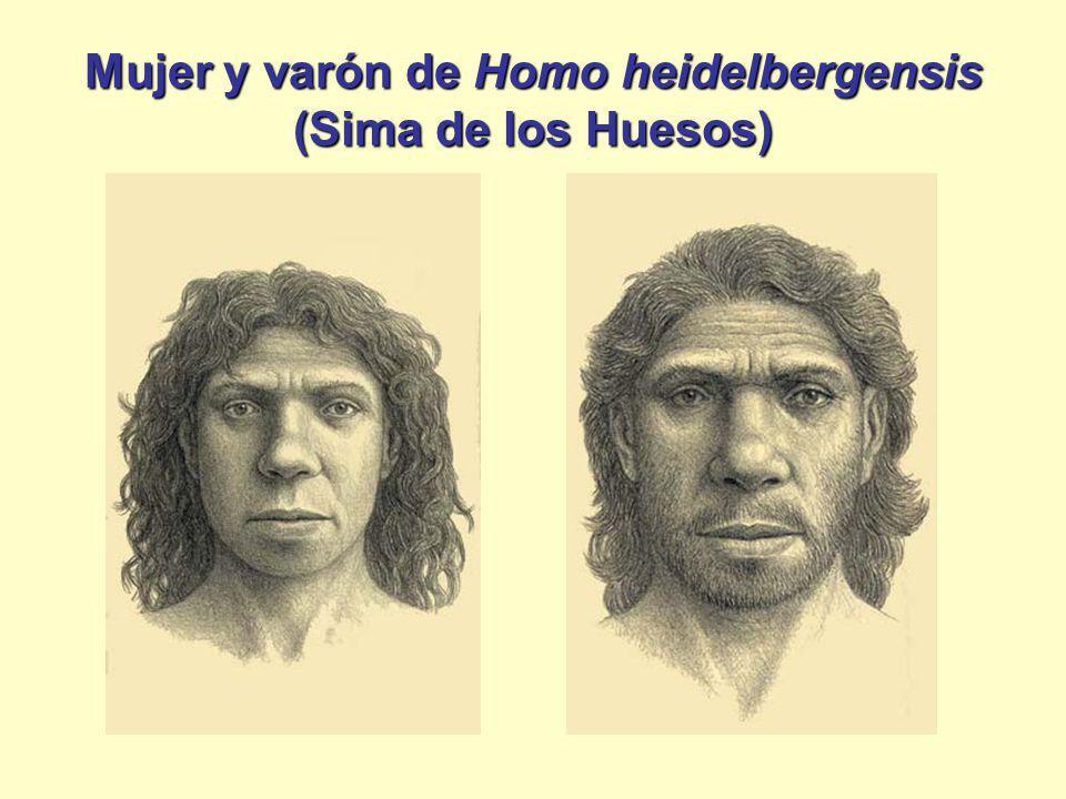 Mujer y varón de Homo heidelbergensis (Sima de los Huesos)