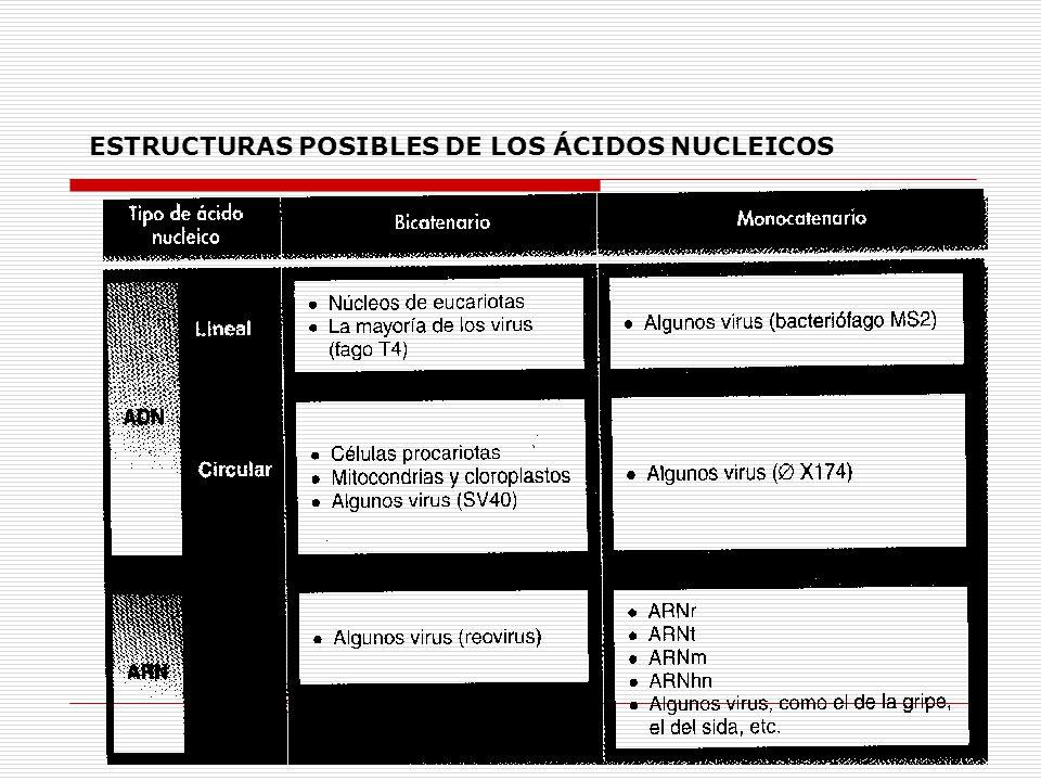 ESTRUCTURAS POSIBLES DE LOS ÁCIDOS NUCLEICOS