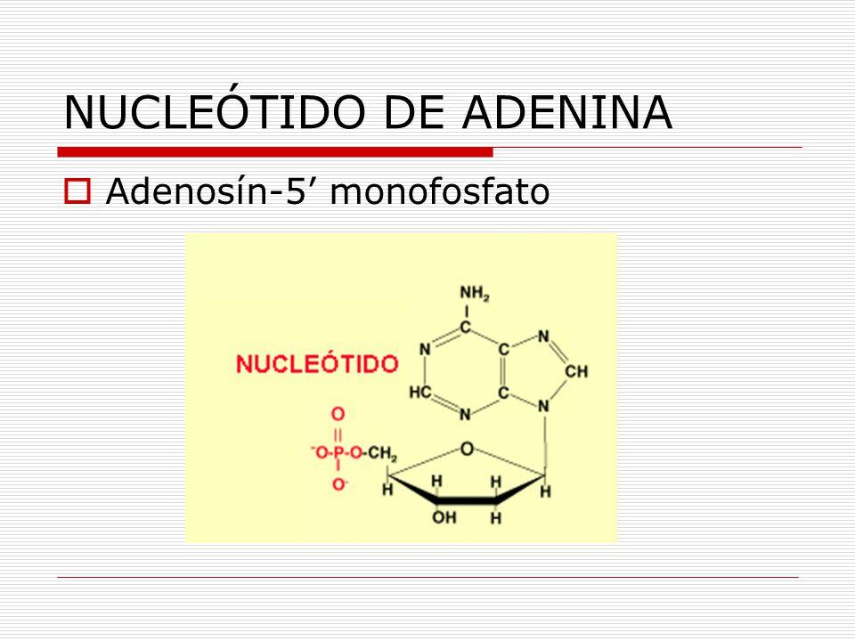 NUCLEÓTIDO DE ADENINA Adenosín-5 monofosfato