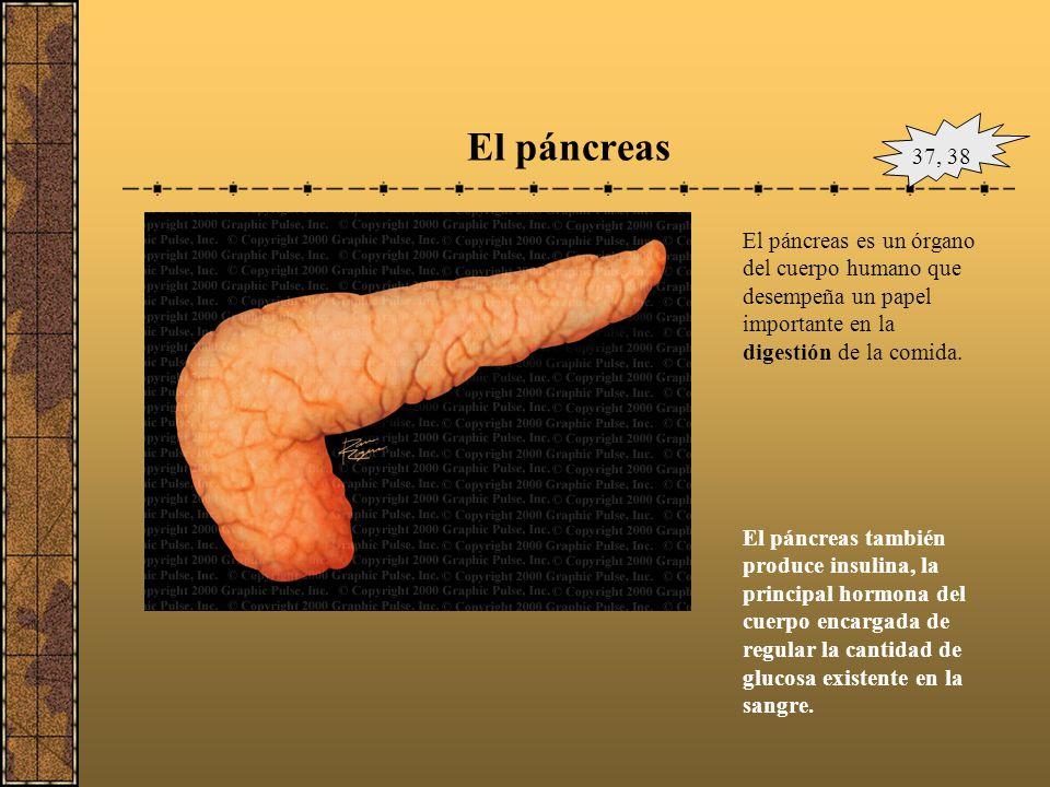 El hígado La producción de bilis, que ayuda a eliminar los desechos y a descomponer las grasas en el intestino delgado durante la digestión. La sangre