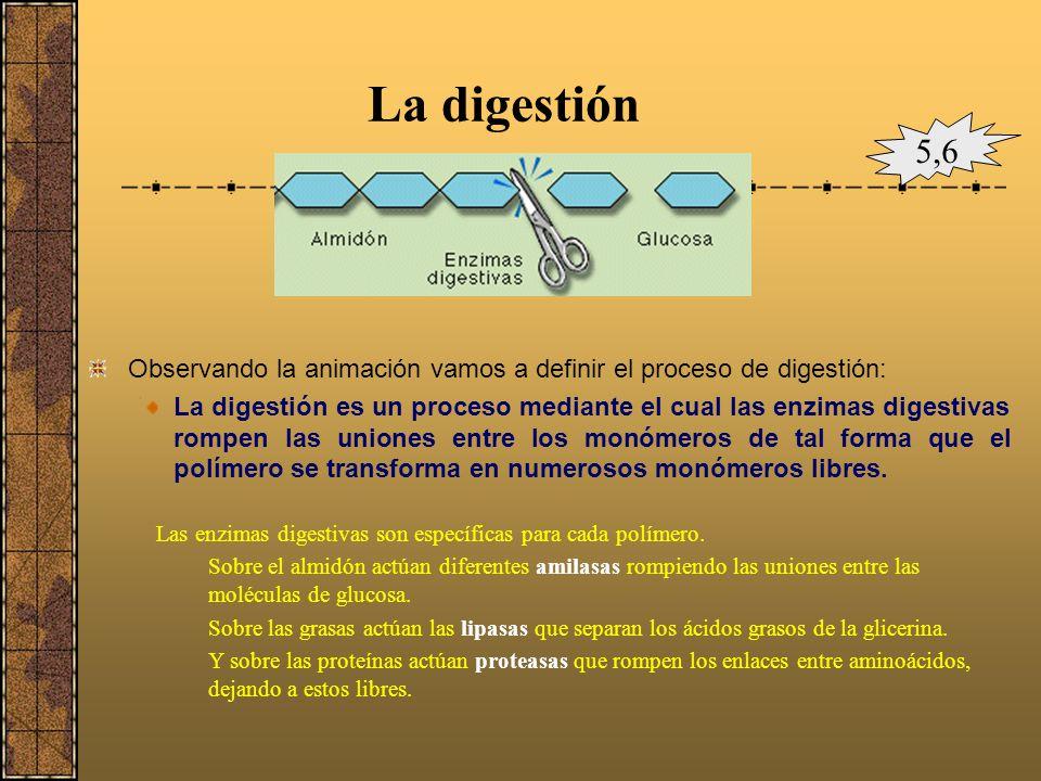 El aparato digestivoaparatodigestivo