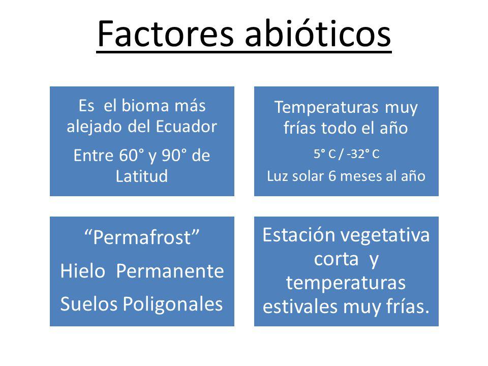 Factores abióticos Es el bioma más alejado del Ecuador Entre 60° y 90° de Latitud Temperaturas muy frías todo el año 5° C / -32° C Luz solar 6 meses al año Permafrost Hielo Permanente Suelos Poligonales Estación vegetativa corta y temperaturas estivales muy frías.