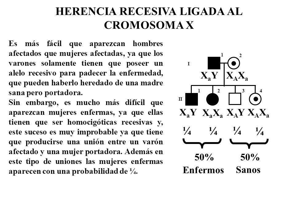 HERENCIA RECESIVA LIGADA AL CROMOSOMA X Es más fácil que aparezcan hombres afectados que mujeres afectadas, ya que los varones solamente tienen que po