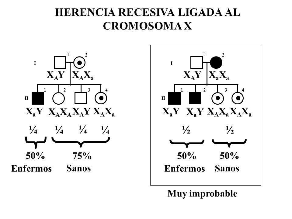 HERENCIA RECESIVA LIGADA AL CROMOSOMA X I II 1 2 123 4 XAYXAYXAXaXAXa XaYXaY XAYXAY XAXaXAXa XAXAXAXA ¼ ¼ ¼ ¼ 50%75% Enfermos Sanos I II 1 2 123 4 XAY