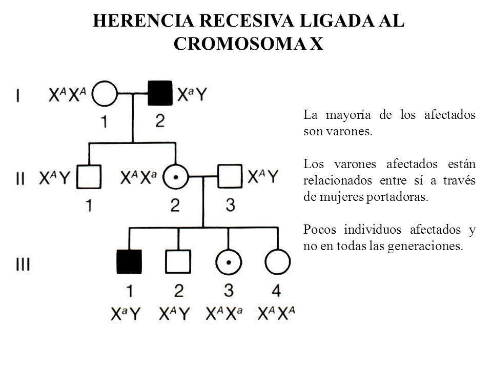HERENCIA RECESIVA LIGADA AL CROMOSOMA X La mayoría de los afectados son varones. Los varones afectados están relacionados entre sí a través de mujeres