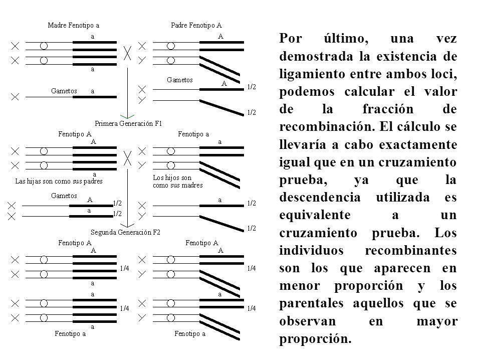 Por último, una vez demostrada la existencia de ligamiento entre ambos loci, podemos calcular el valor de la fracción de recombinación. El cálculo se