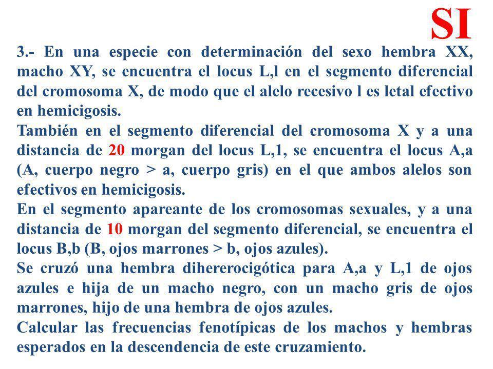 3.- En una especie con determinación del sexo hembra XX, macho XY, se encuentra el locus L,l en el segmento diferencial del cromosoma X, de modo que e