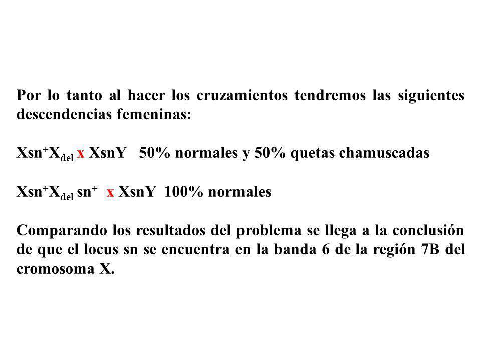 Por lo tanto al hacer los cruzamientos tendremos las siguientes descendencias femeninas: Xsn + X del x XsnY 50% normales y 50% quetas chamuscadas Xsn