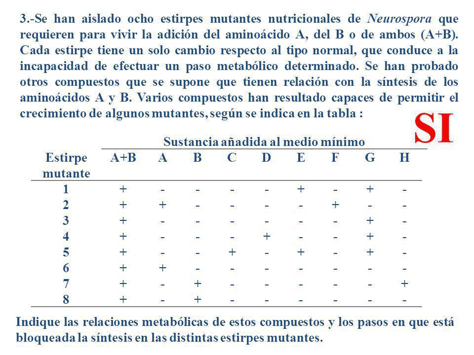 3.-Se han aislado ocho estirpes mutantes nutricionales de Neurospora que requieren para vivir la adición del aminoácido A, del B o de ambos (A+B). Cad