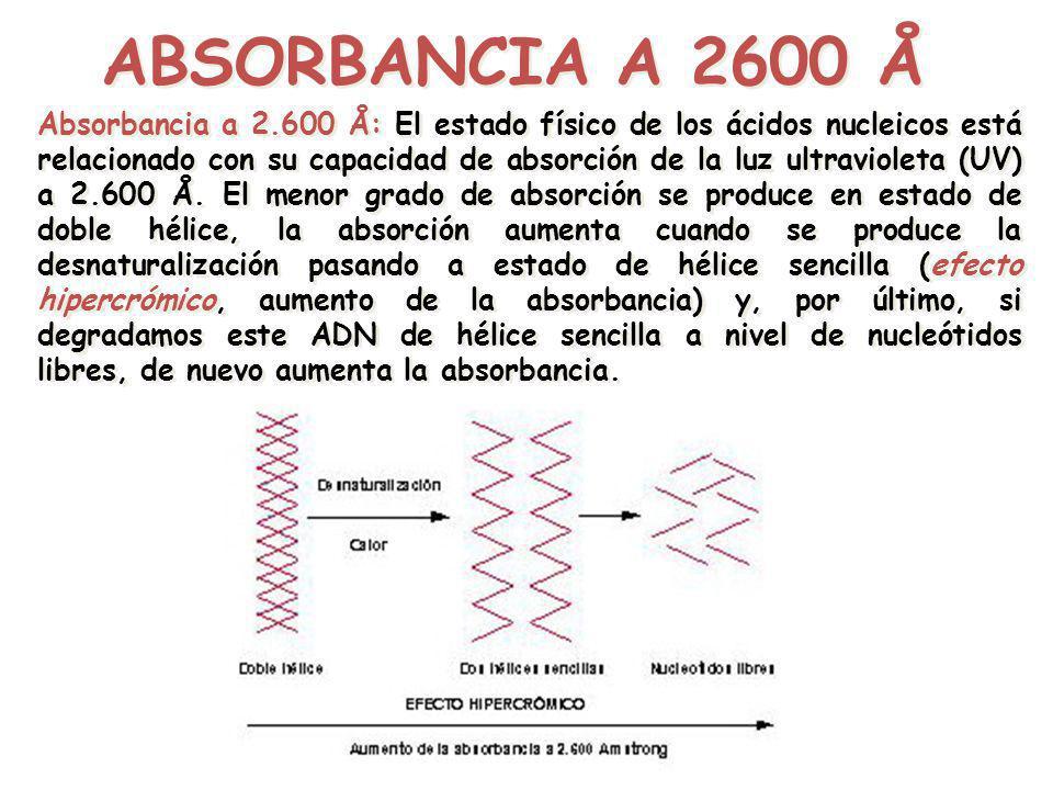 ABSORBANCIA A 2600 Å Absorbancia a 2.600 Å: El estado físico de los ácidos nucleicos está relacionado con su capacidad de absorción de la luz ultravio