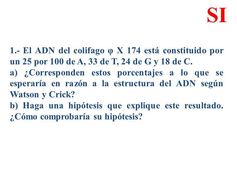 1.- El ADN del colifago φ X 174 está constituido por un 25 por 100 de A, 33 de T, 24 de G y 18 de C. a) ¿Corresponden estos porcentajes a lo que se es