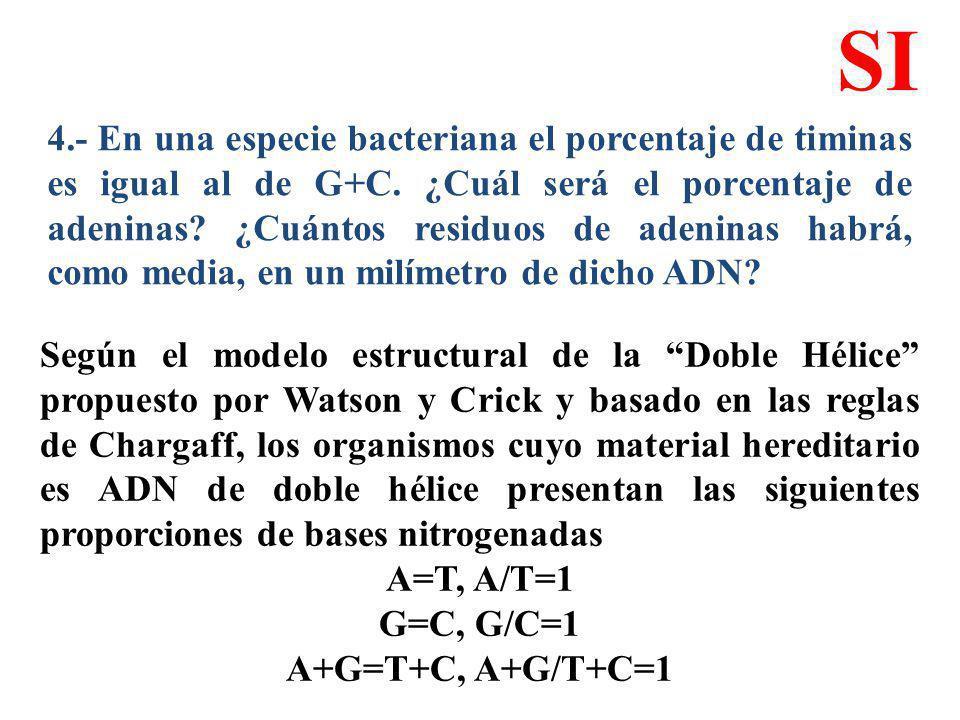 4.- En una especie bacteriana el porcentaje de timinas es igual al de G+C. ¿Cuál será el porcentaje de adeninas? ¿Cuántos residuos de adeninas habrá,