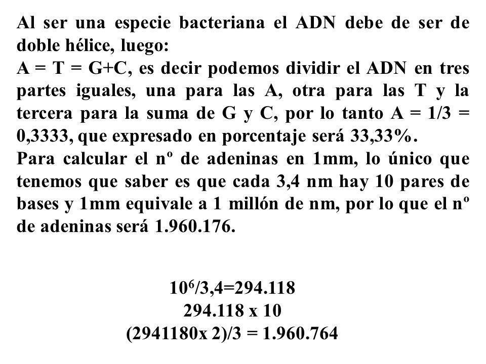 Al ser una especie bacteriana el ADN debe de ser de doble hélice, luego: A = T = G+C, es decir podemos dividir el ADN en tres partes iguales, una para