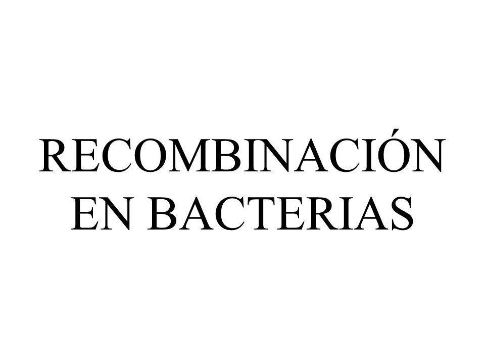 RECOMBINACIÓN EN BACTERIAS