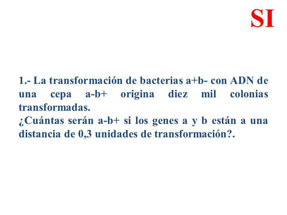 1.- La transformación de bacterias a+b- con ADN de una cepa a-b+ origina diez mil colonias transformadas. ¿Cuántas serán a-b+ si los genes a y b están