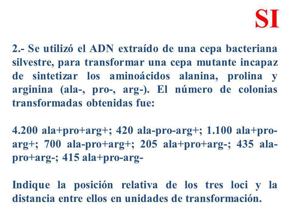 2.- Se utilizó el ADN extraído de una cepa bacteriana silvestre, para transformar una cepa mutante incapaz de sintetizar los aminoácidos alanina, prol