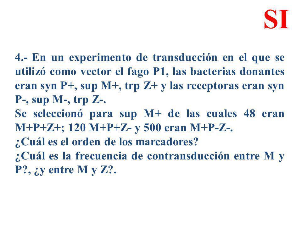 4.- En un experimento de transducción en el que se utilizó como vector el fago P1, las bacterias donantes eran syn P+, sup M+, trp Z+ y las receptoras