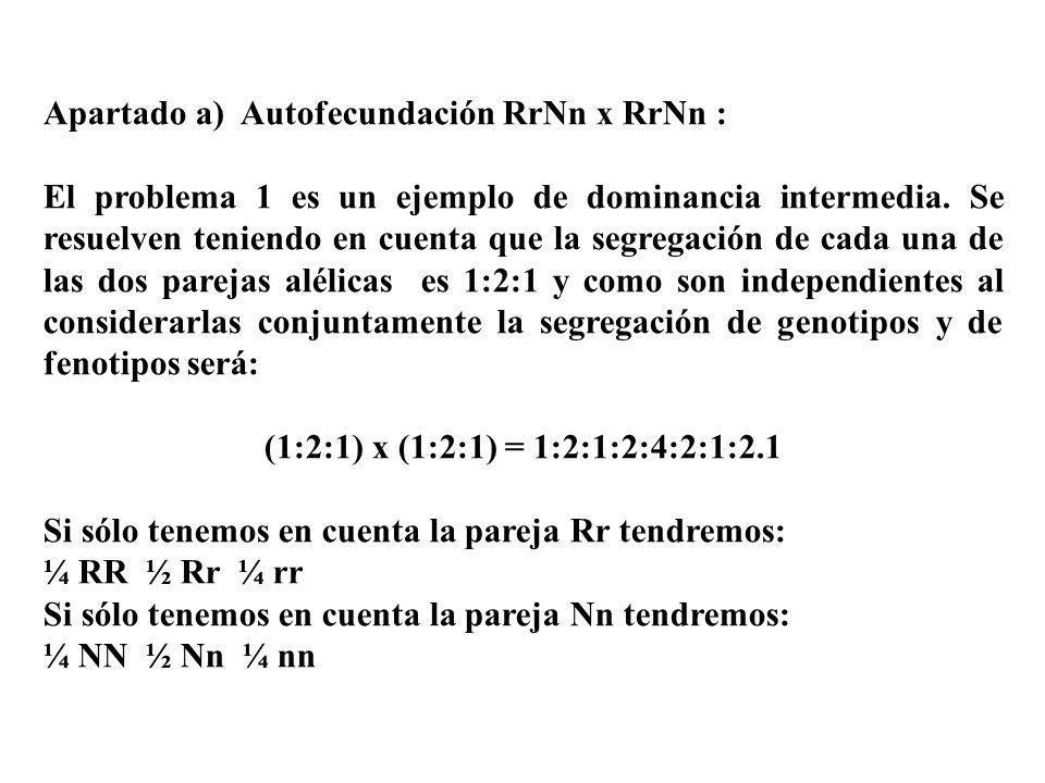 Apartado a) Autofecundación RrNn x RrNn : El problema 1 es un ejemplo de dominancia intermedia. Se resuelven teniendo en cuenta que la segregación de