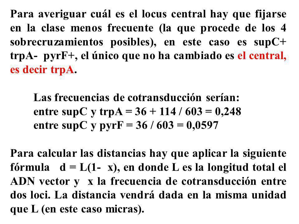 Para averiguar cuál es el locus central hay que fijarse en la clase menos frecuente (la que procede de los 4 sobrecruzamientos posibles), en este caso