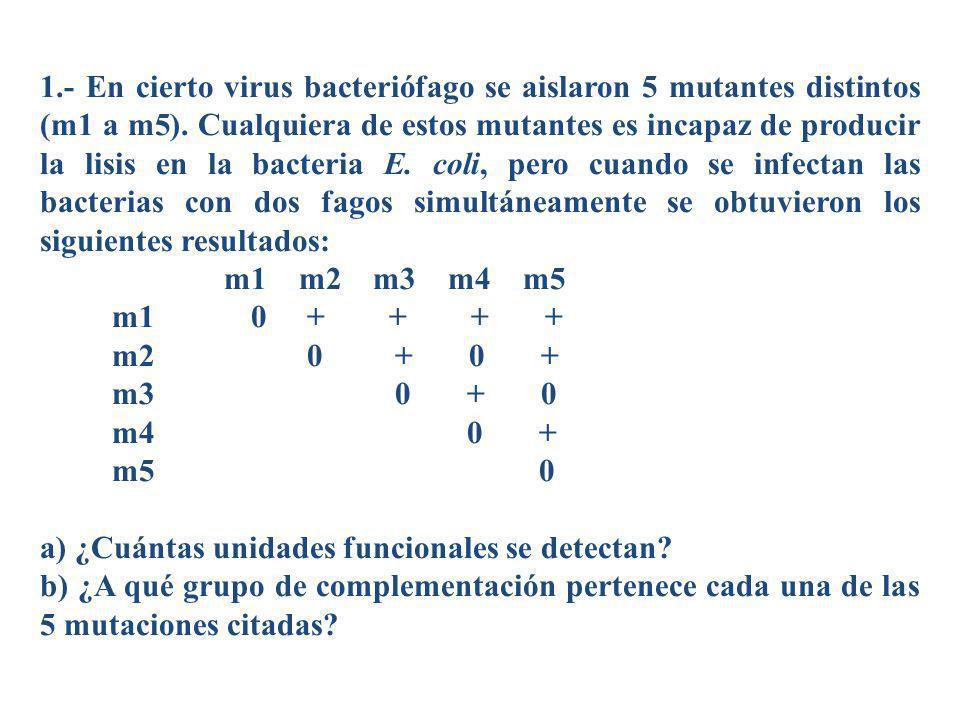 1.- En cierto virus bacteriófago se aislaron 5 mutantes distintos (m1 a m5). Cualquiera de estos mutantes es incapaz de producir la lisis en la bacter