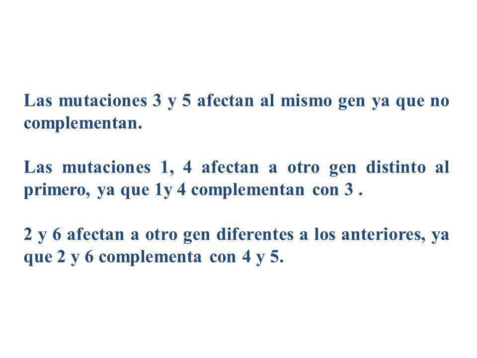 Las mutaciones 3 y 5 afectan al mismo gen ya que no complementan. Las mutaciones 1, 4 afectan a otro gen distinto al primero, ya que 1y 4 complementan